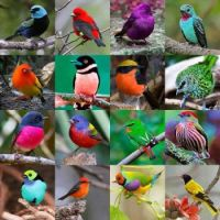 colorful birds...!