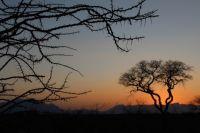 Kruger national park at sunset
