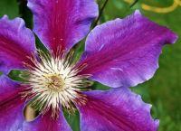 The Vivid Flower