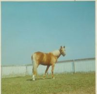 Theme, Horses: Lady, a distant relative of Trigger, Jr.
