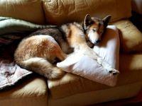 Ali on the sofa