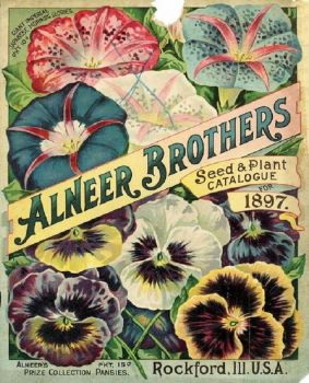 Vintage Pansy Seed Packet
