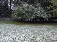 First snow, October 27