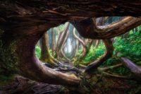 Wayward Forest