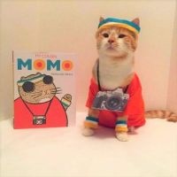 Cat Icon Game #63 - please identify