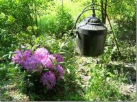Rhododendron and old tank