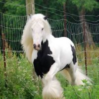 for all my lovely friends on jigidi who love horses!!!!!!!!!
