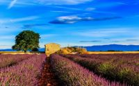 france_provence