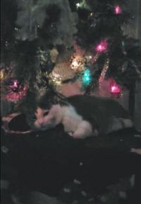 Zazzles and the tree