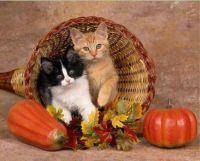 October Kittens