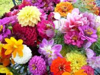 fresh flowers.jpg7