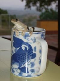 Frog in my coffee cup_2007