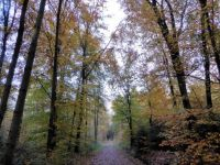 Theme is trees: Lovely late Autumn walk in the woods of Winterswijk.