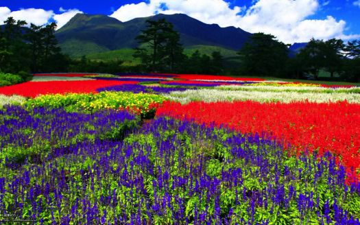 Colorful Carpet of Flowers
