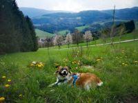 Kirchberg, Rakousko (2)