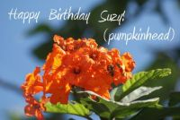 Happy Birthday Suzy!   (pumpkinhead)