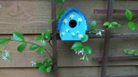 Bird House In The Jasmine  4-20-13