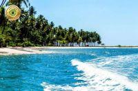 Brasil - Praia dos Carneiros (Pernambuco)