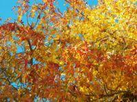 Autumn's glorious colors