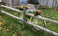 Bicycle - neighbours fence