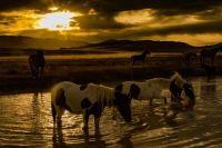 2  ~  'Wild horses at sunrise in the Utah desert.'