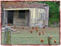 The Chook House.