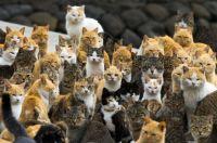 Cat Island, Aoshima, Japan