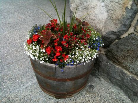 Pretty flower pot