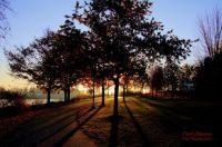 Park Shadows