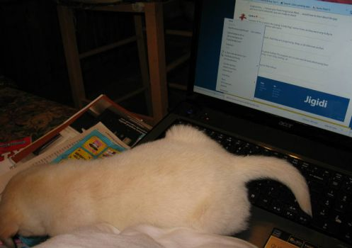 Hummm......Is that a puppy laying across my laptop computer???