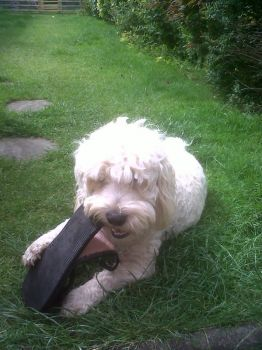 Oh Alfie that's my shoe