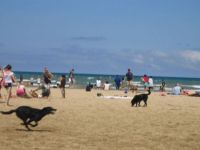 chicago dog beach