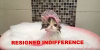 RESIGNED INDIFFERENCE