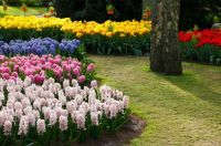 colorful-flower-garden