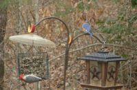 at the feeders