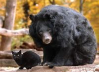 Other examples of strange and improbable animal friendships