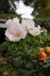 Citris Flower