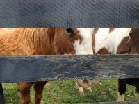 Horses-eye3264x2448