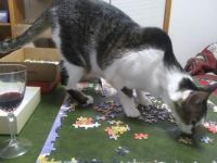 Shirleys Cat Puzzle 2