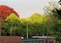 DSCF1454 bomenkruinen in Emmen
