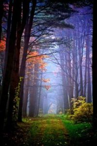 Autumn mysterious forest, Hachimantai in Iwate, Japan
