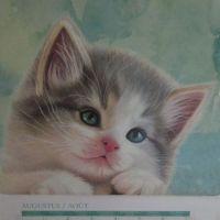 Kitty Calendar August 2021