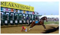 Bodexpress in the 144th Preakness Stakes