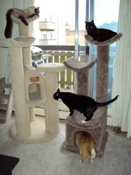 004 New Cat Tree (5)
