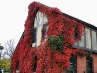 Amazing red vines