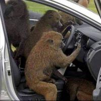 monkey - do, monkey does