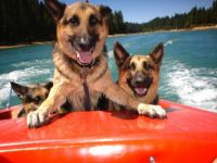 Boating Dogs