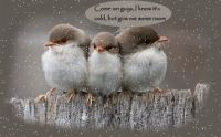 Thema Birds:Birds in snow