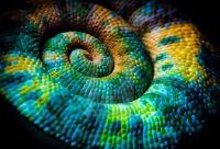 4   ~  'Chameleon Tail'