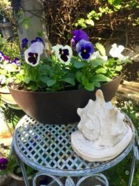 pansies and awesome shell